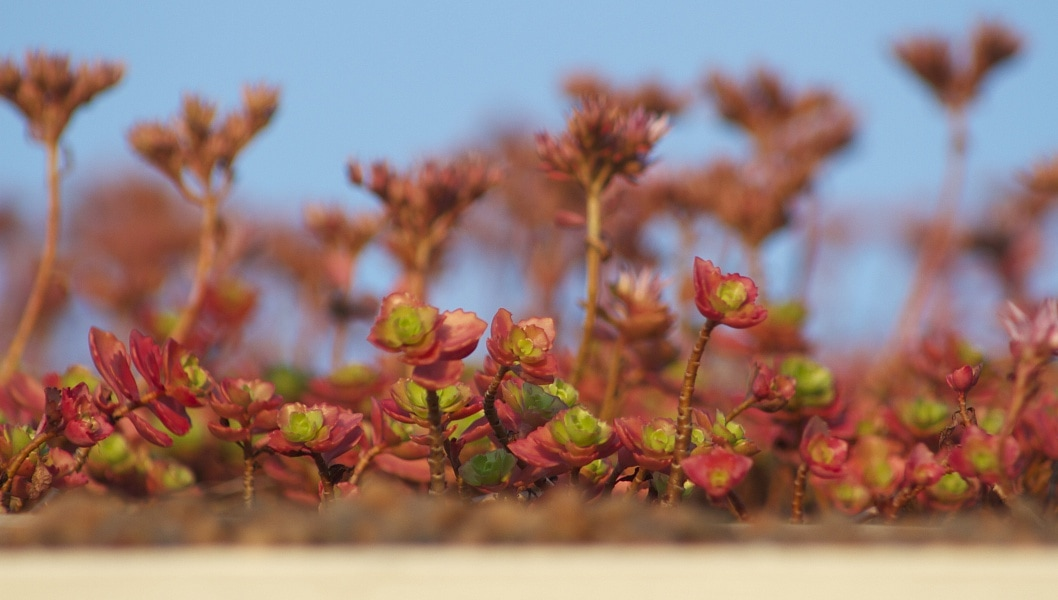 Минимальный слой субстрата для растений означает малый вес кровли.