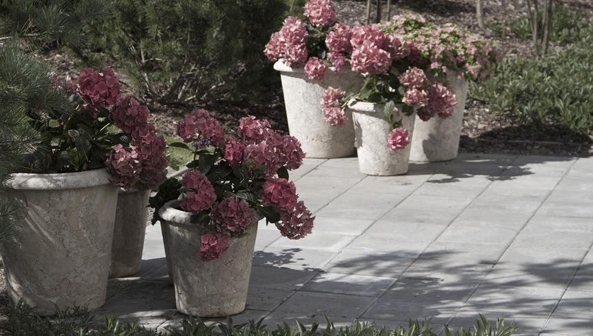 Сезонные цветы (гортензии) украшают площадку у входа