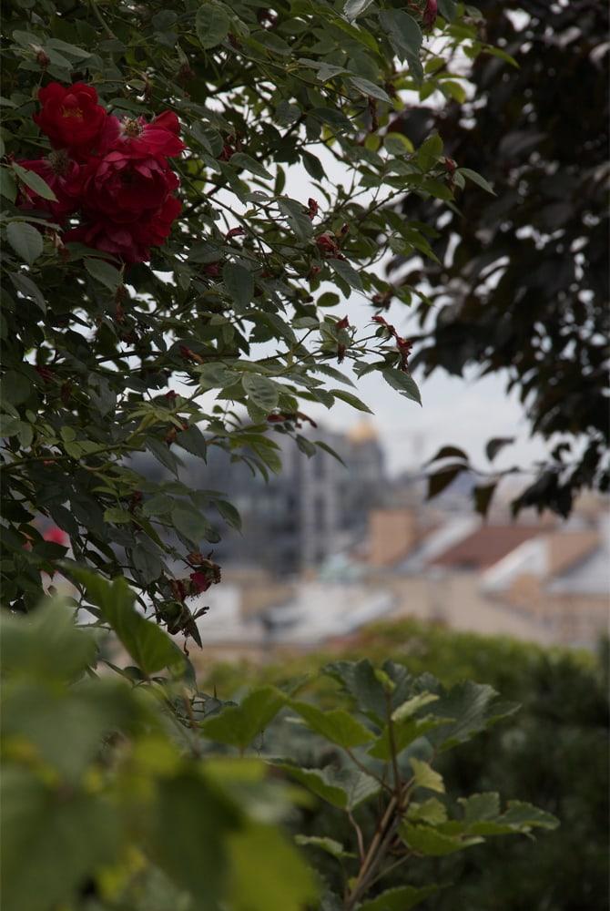 Терраса с садом