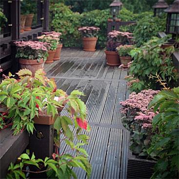 Очиток видный (Седум): посадка и уход за цветком, размножение, применение растения в ландшафтном дизайне