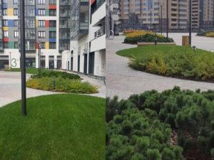 озеленение жилого комплекса