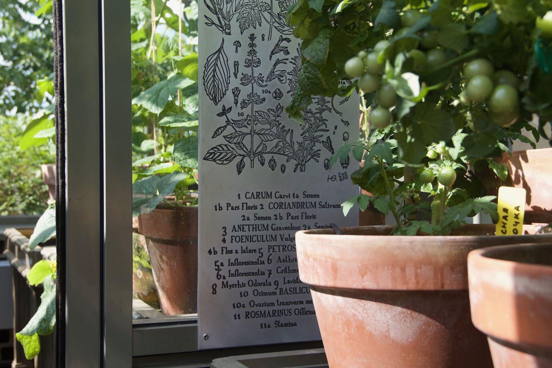 Ботаническая графика с пряными травами